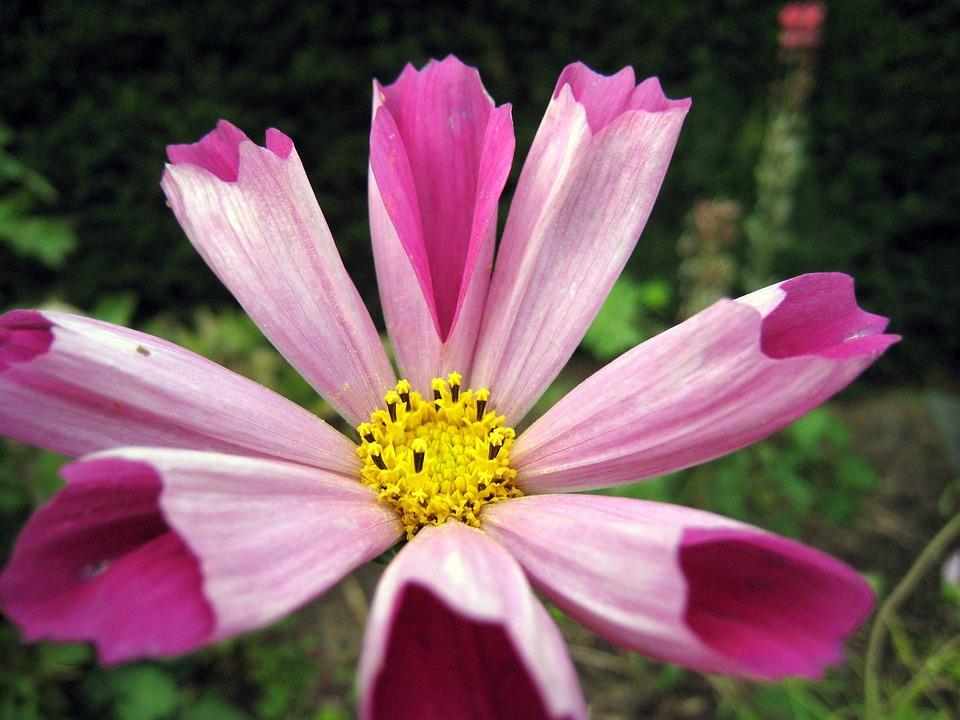 Flower, Spring, Floral, Nature, Purple