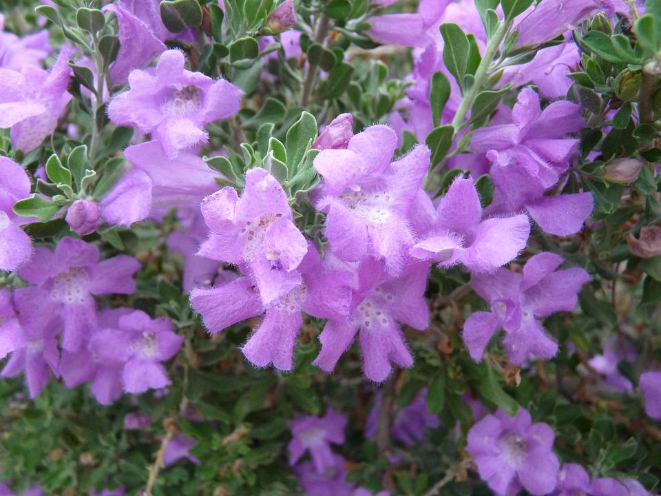 Purple, Flowers, Nature