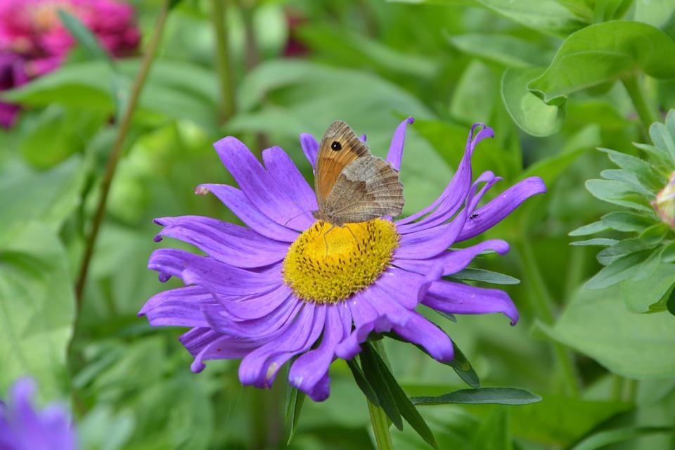 Butterfly, Flower, Purple, Nature, Summer, Plant