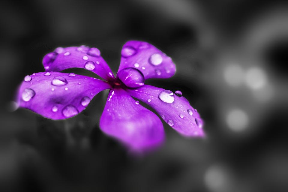 Flower, Purple, Purple Flowers, Purple Flower, Nature