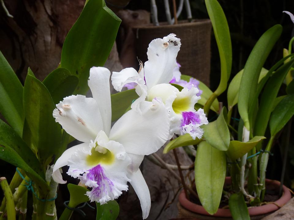 free photo purple nature white flower flowers orchids plant  max, Beautiful flower