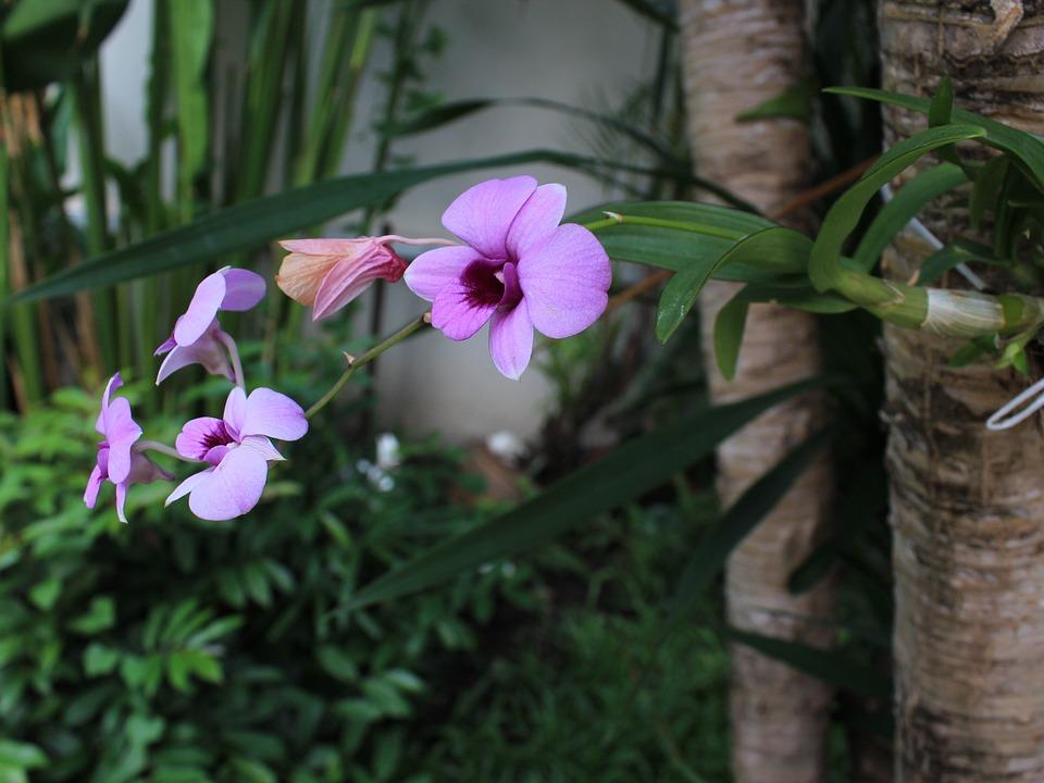 Orchid, Purple