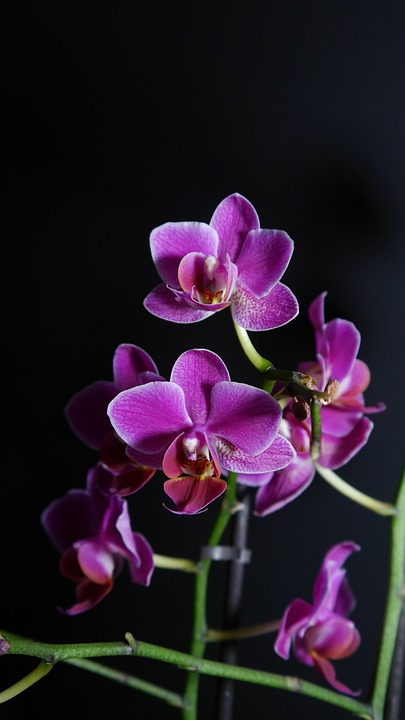 Orchid, Purple, Flower, Blossom, Bloom, Light Purple