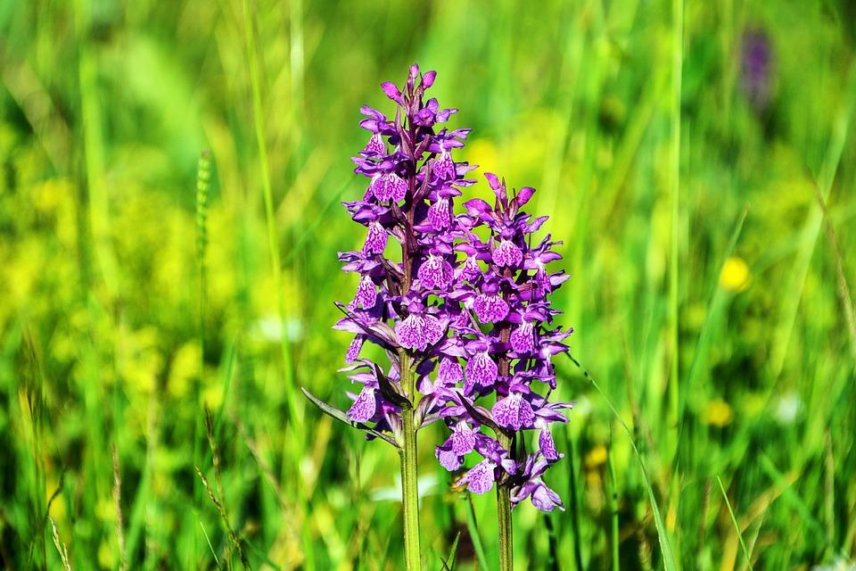 Flower, Orchid, Plant, Beautiful, Purple, Wildflower
