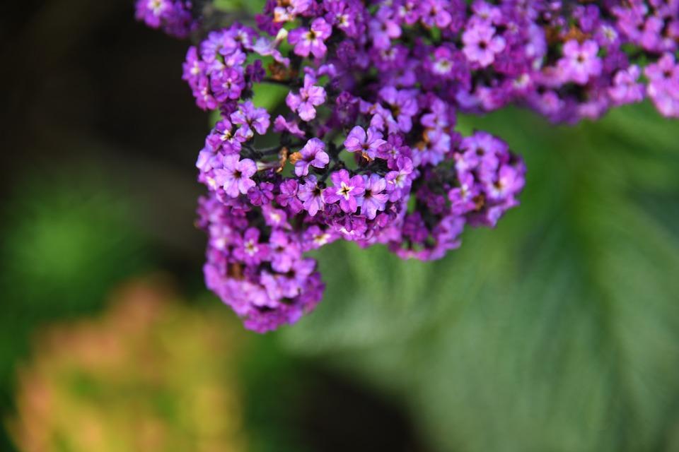Purple, Flower, Bloom, Color, Leaf, Plant, Growth, Life