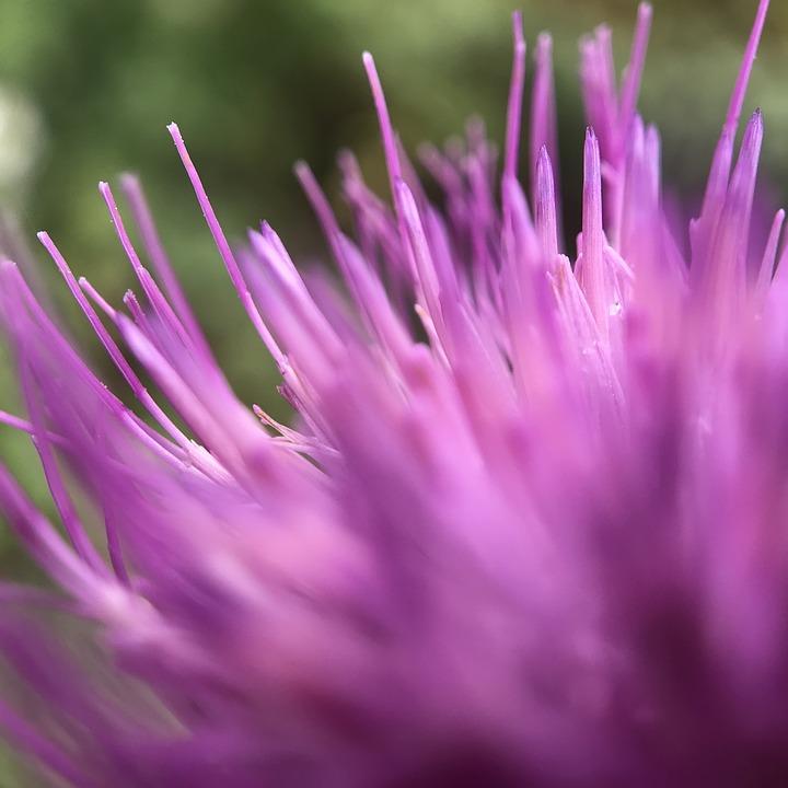 Flower, Plant, Garden, Purple