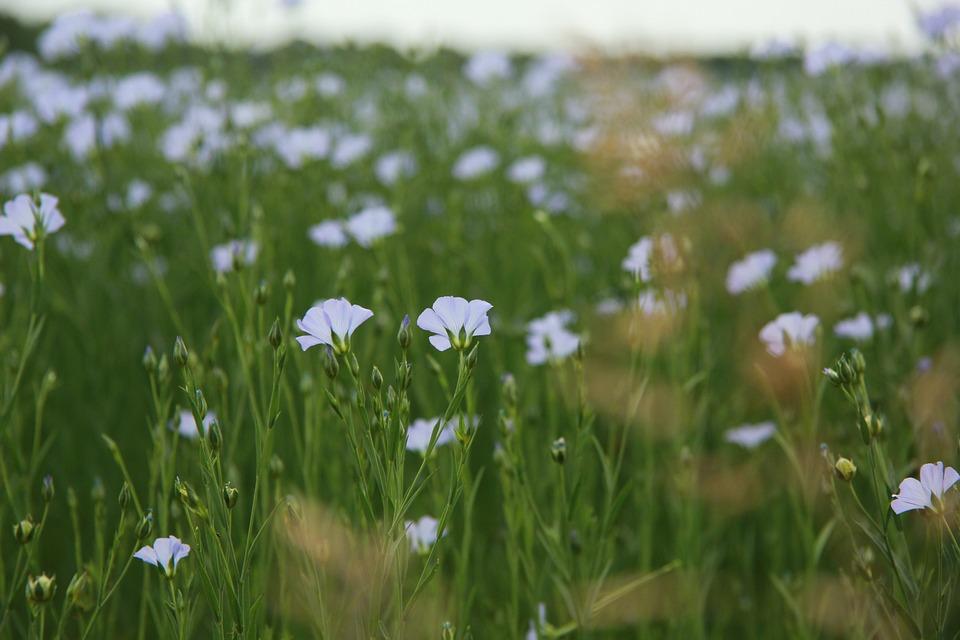 Flowers, Plants, Meadow, Field, Afternoon, Purple, Buds
