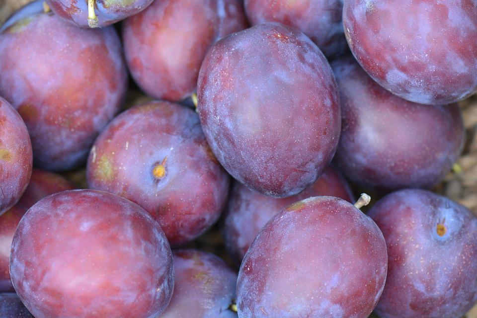 Plums, Fruit, President Plums, Purple