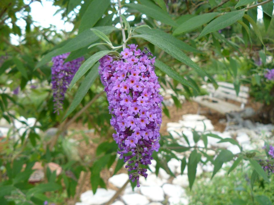 Purple, Garden, Spring, Purple Flower, Blossom, Bloom