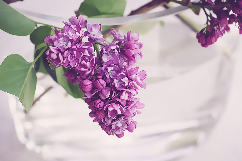 Free photo purple spring flowers bloom lilac nature violet max pixel lilac purple violet spring bloom flowers nature mightylinksfo