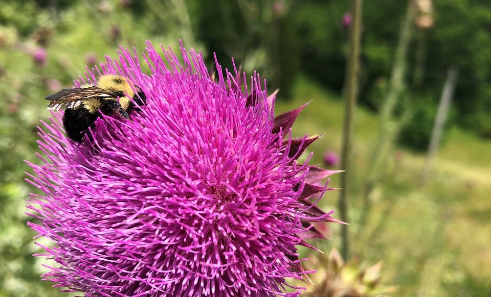 Bees, Flower, Insect, Spring, Lavender, Purple, Violet