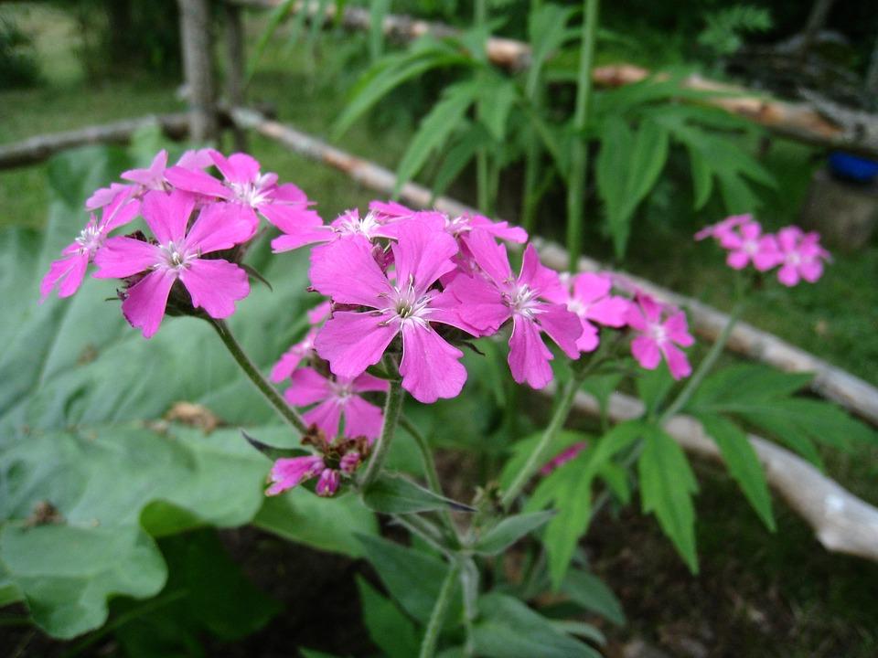 Flowers, Purple, Summer, Leaf, Green, Garden
