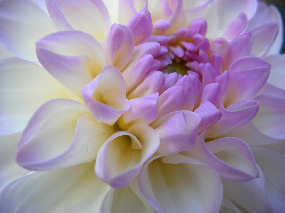 White, Purple, Color, Summer, Garden, Quebec, Nature