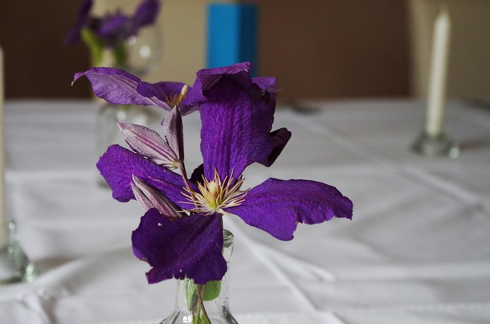 Table Manners, Flower, Purple