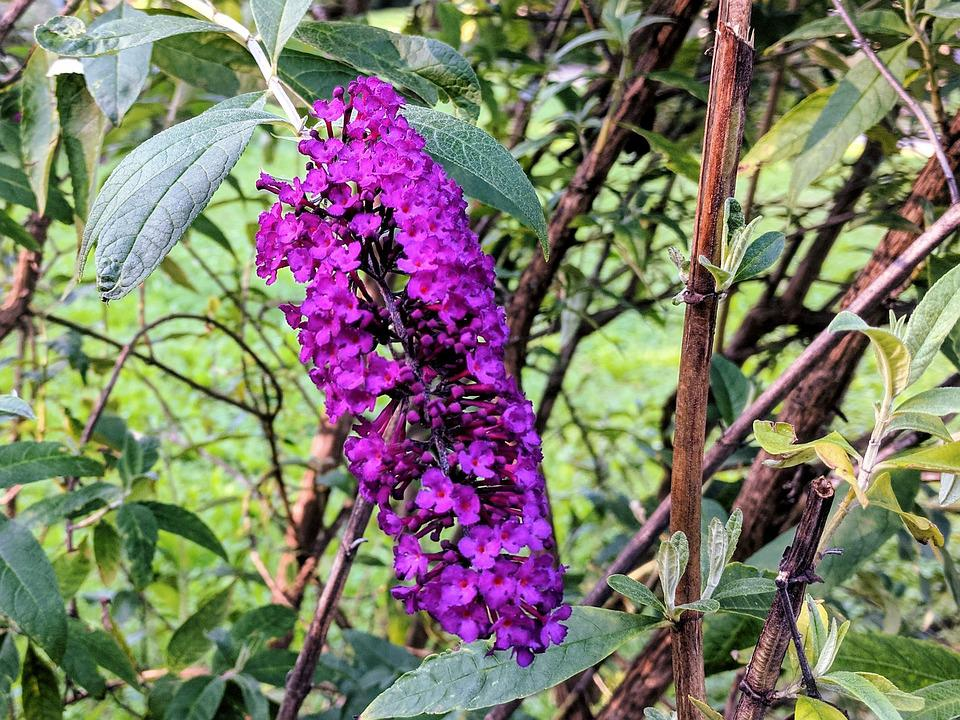 Flower, Tree, Purple, Plant