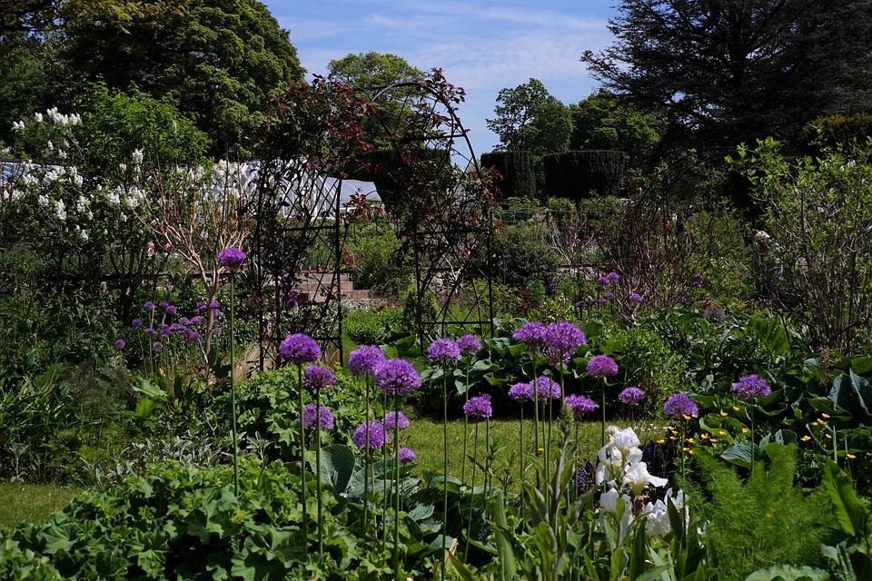 Flowers, Roses, Alliums, Bloom, Plant, Trees, Purple