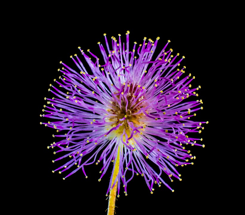 Wild Flower, Small Flower, Purple