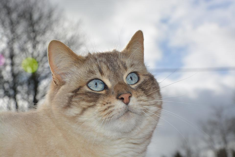 Cat, Pussy, Pussy Nala, Feline, Animal, Portrait Of Cat