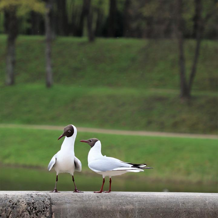Birds, White, Quarrel, Emotions, Park, Stroll, Cute
