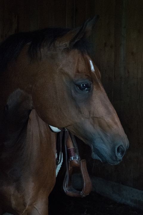 Horse, Quarterhorse, Brown, Stall