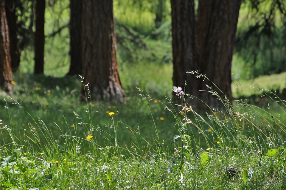 Wind, In The Forest, Grass, Meadow, Plant, Quiet