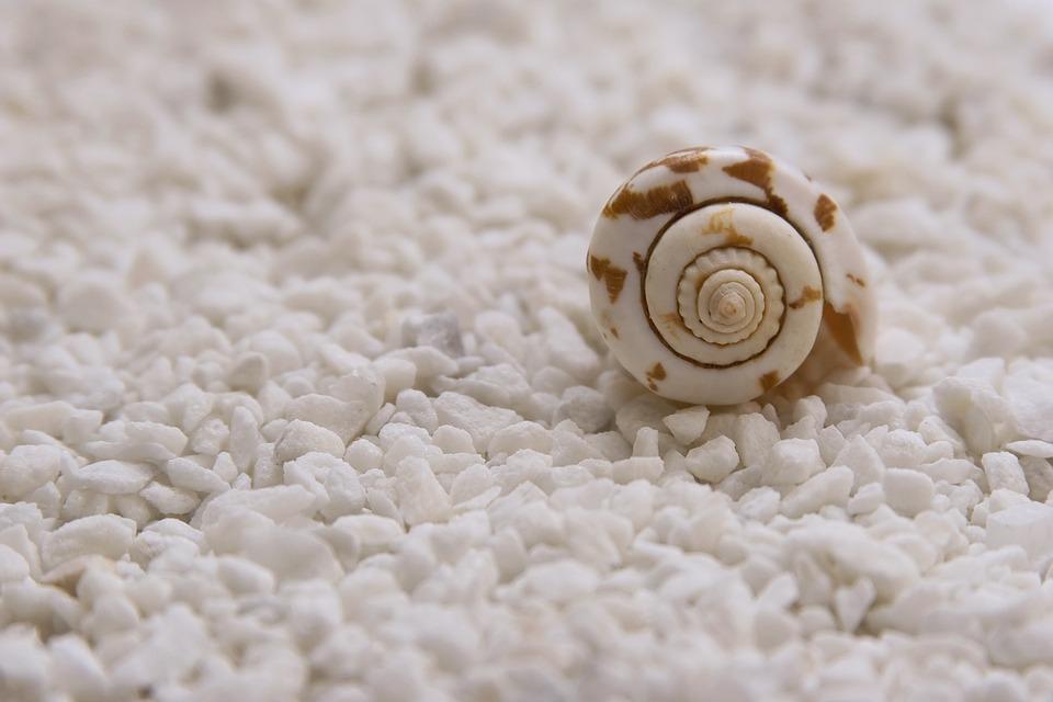 Mussels, Seashells, Quiet, Scene, Closed, Sink, Perfume