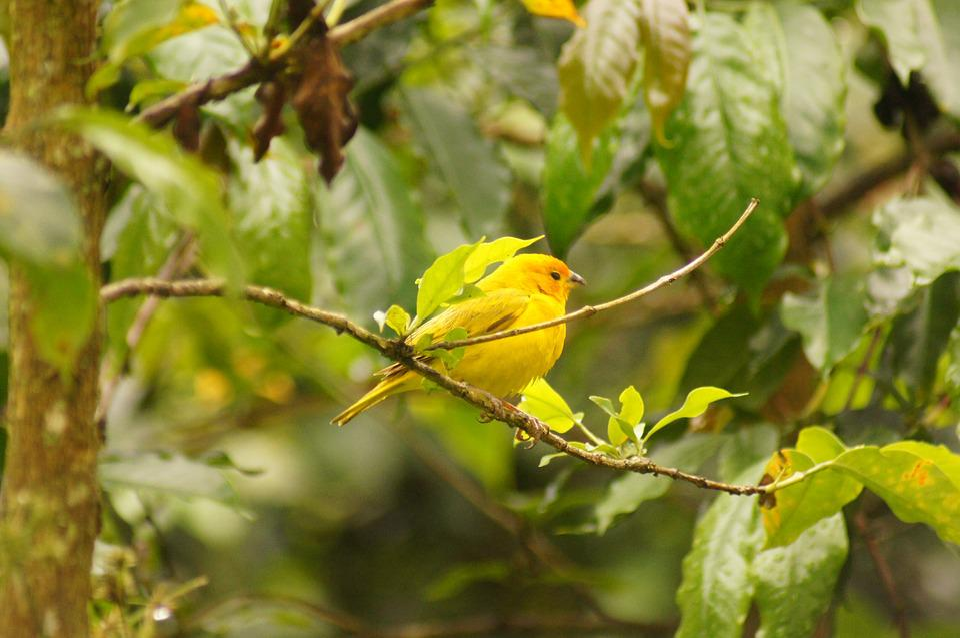 Birds, Quimbaya, Quindio, Colombia