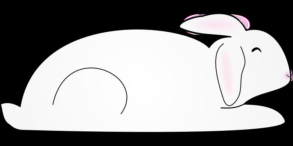 Animal, Bunny, Mammal, Rabbit