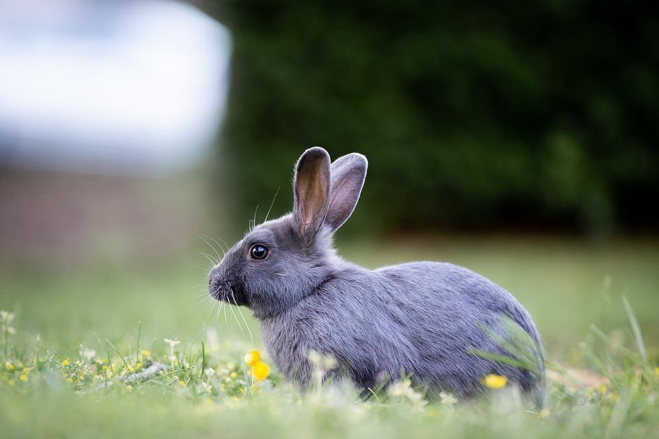 Bunny, Rabbit, Grass, Cute, Furry, Brown, Wild, Fur