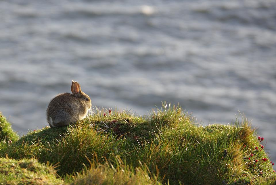 Rabbit, Animals, Cliff, Mammals, Wildlife, Fauna, Grass