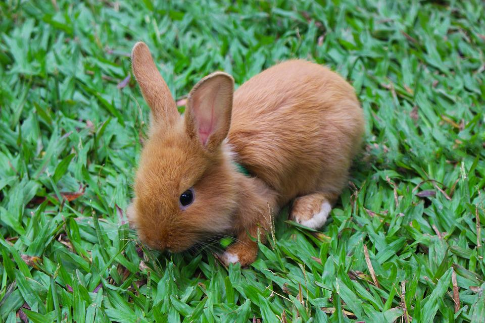 free photo rabbit nature bunny cute baby rabbit animal max pixel