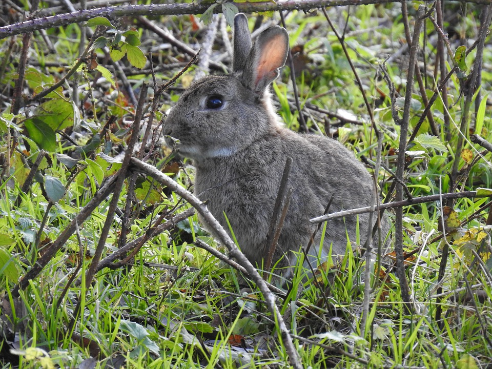 Rabbit Rabbit, Portrait, Nature, Wild, Mammals
