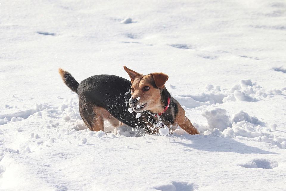 Dog, Snow, Race, Play, Agile, Fun, Winter, Animal World