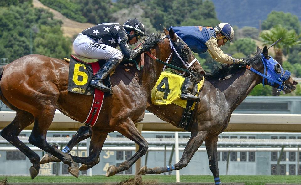 Horse, Horse Race, Race, Animal, Equestrian