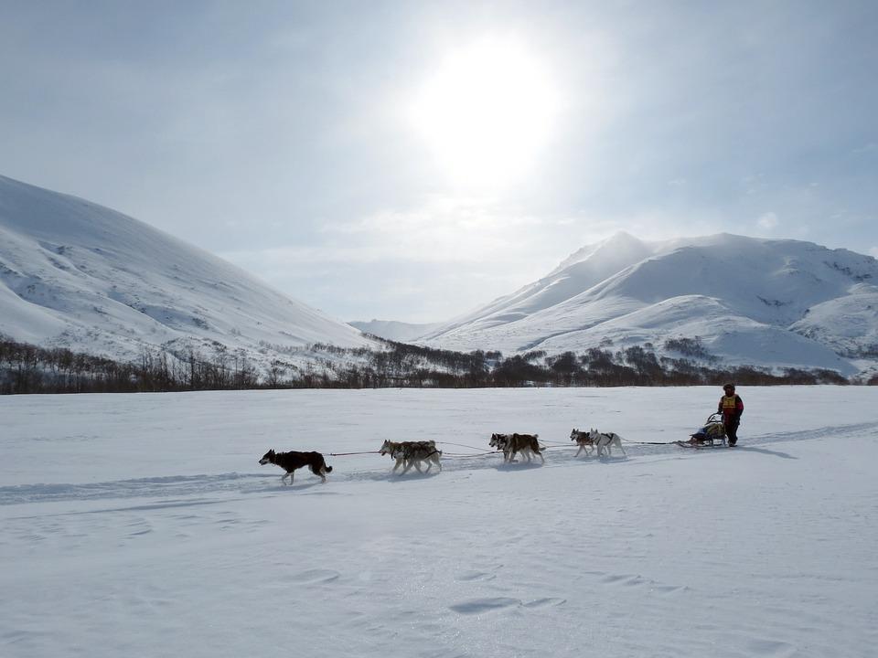 Dog, Laika, Husky, Race, Sleds, Dog Sled Race, Sled