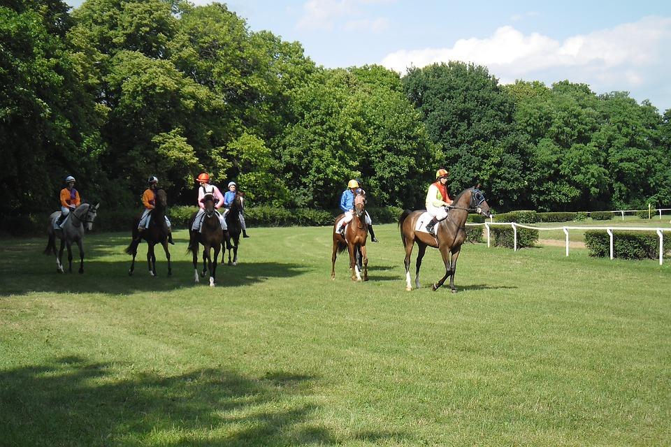 Poland, Horses, Race, Horse Racing, The Horse