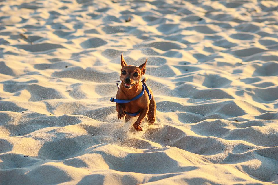 Dog, Race, Beach, Sand, Summer, Sea