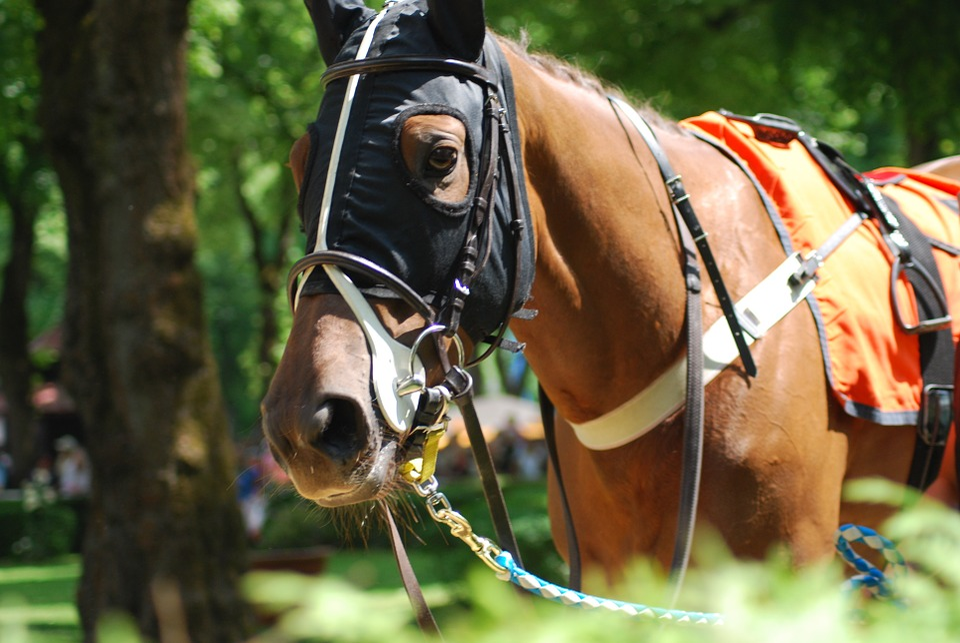 Race, Horses, Racecourse