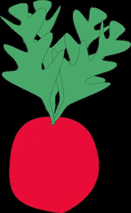 Radish, Vegetable, Food, Plant, Red, Small, Fresh