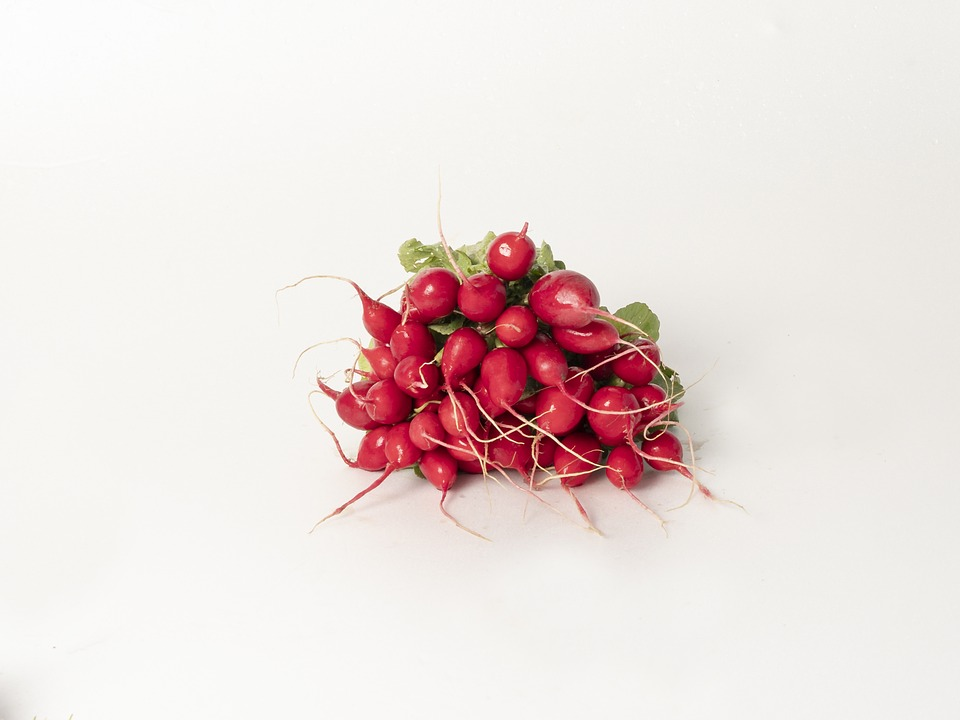 Red, Radish, Salad