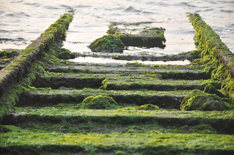Moss, Rail, Sea, Ruins, Barren