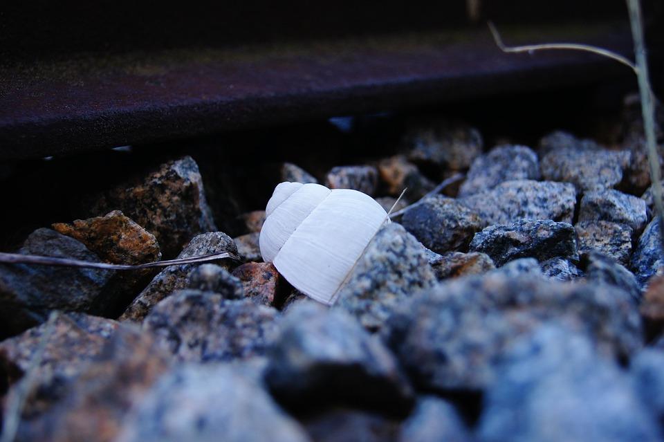 Rail, Snail, Pebble, Shell, Nature