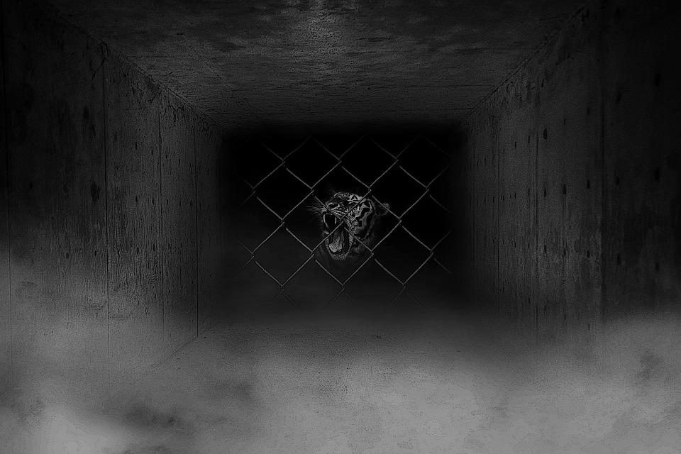 Tiger Animal Wallpaper Cage Captive Railings Fog