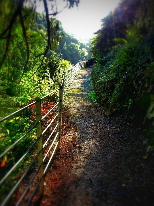 Pathway, Railings, Trees, Nature, Landscape, Footpath
