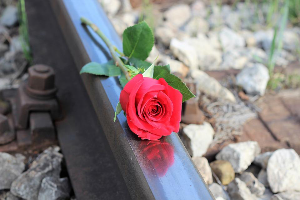 Red Rose, Railway, Suicide, Sadness, Tragedy, Love