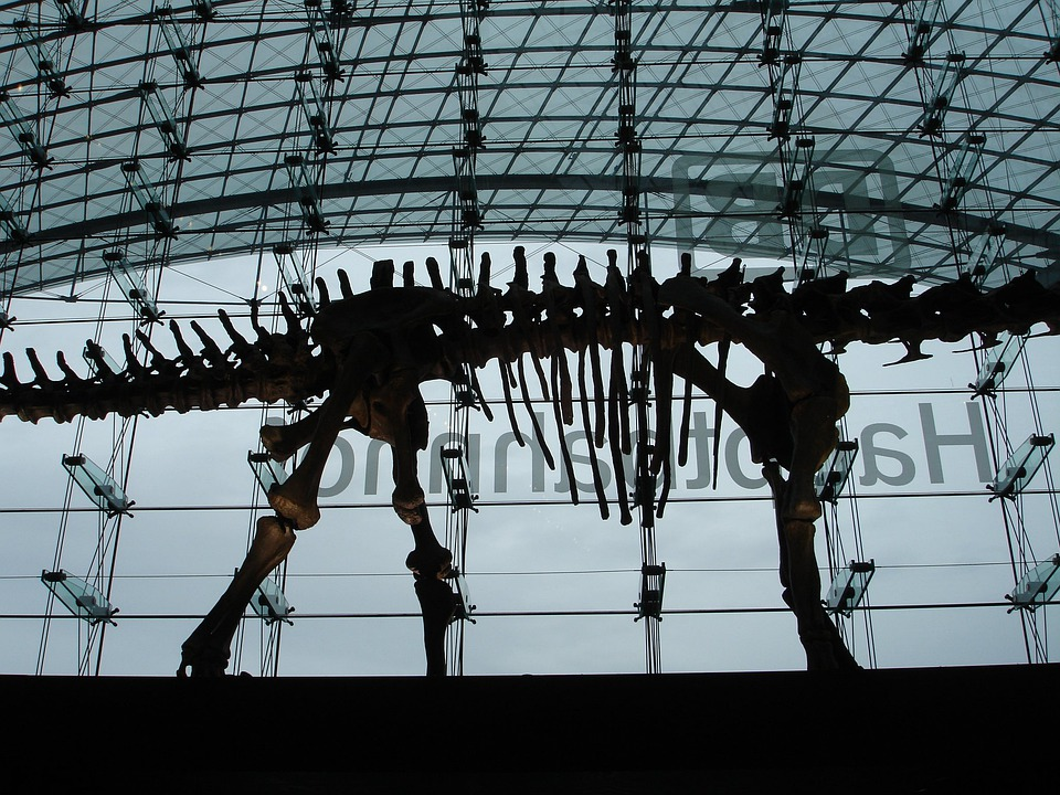 Railway Station, Concourse, Berlin, Dinosaur