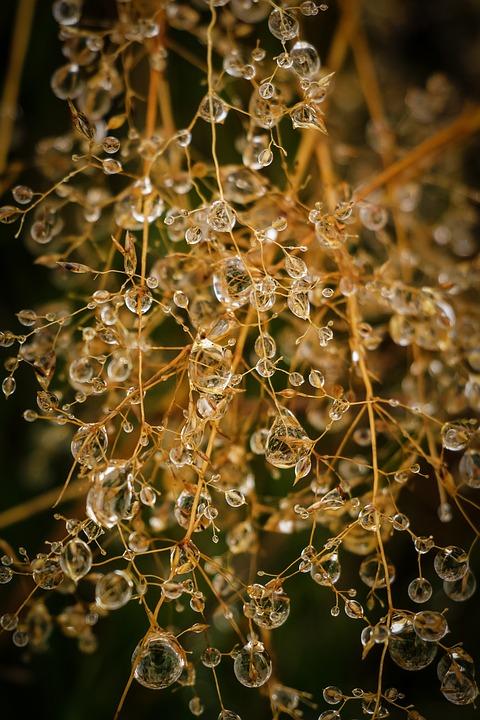 Drops, Water, Drop, Nature, Water Droplets, Rain, Dew