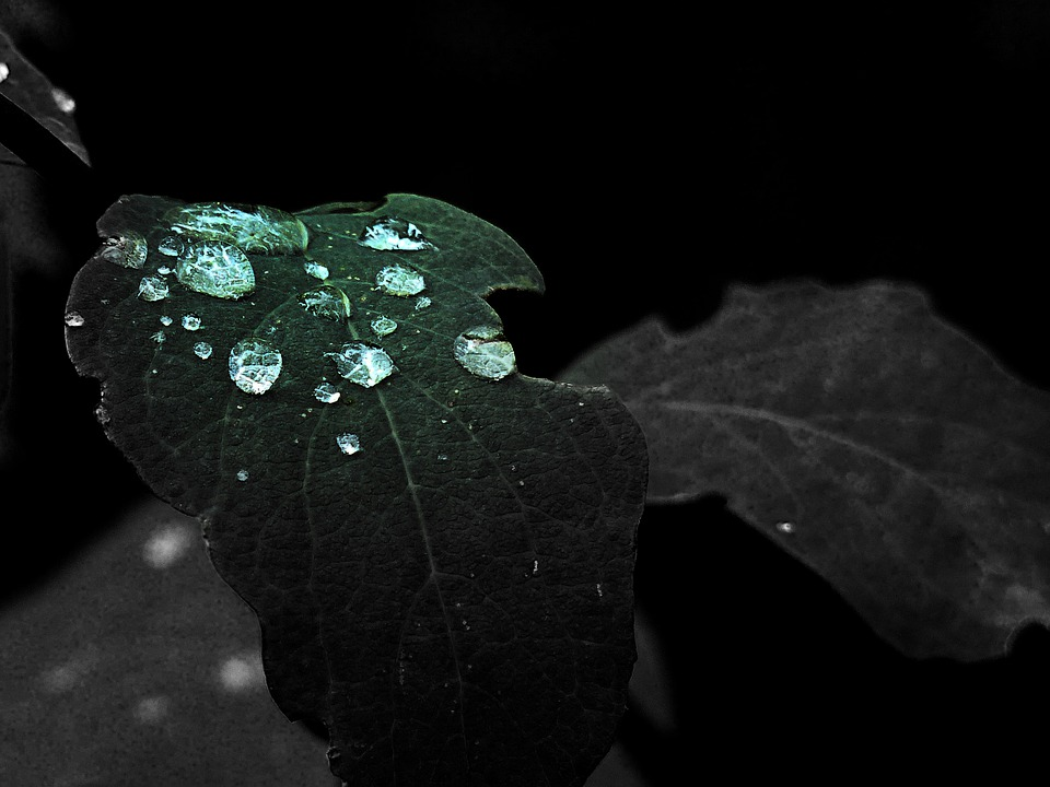 Green, Leaf, Rain Drops, Early Morning, Macro