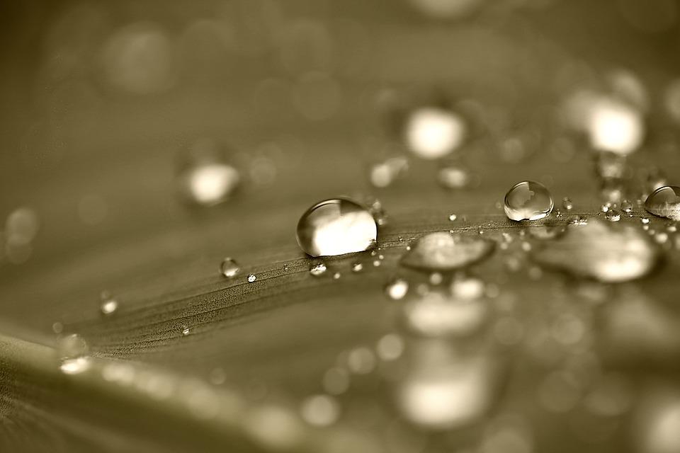 Drops, Drops Of Water, Water, Rosa, Rain Drops