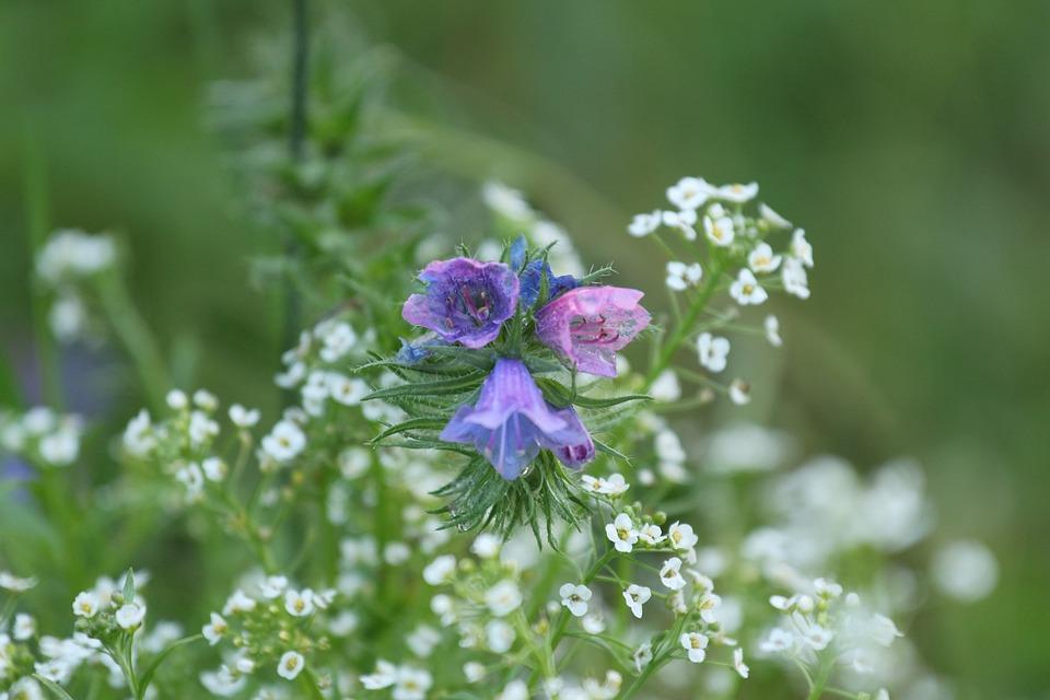 Flower, Macro, Flourished, Garden, Blue, Rain